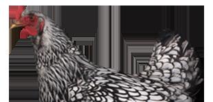 Hühnerställe und Geflügelzubehör