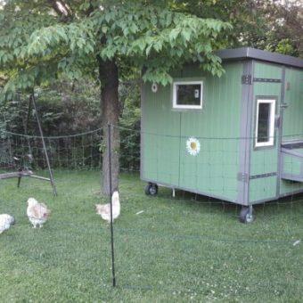 Hühnerstall Tres Schatten