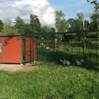 Hühnerstall Tres mit Hühnerschar